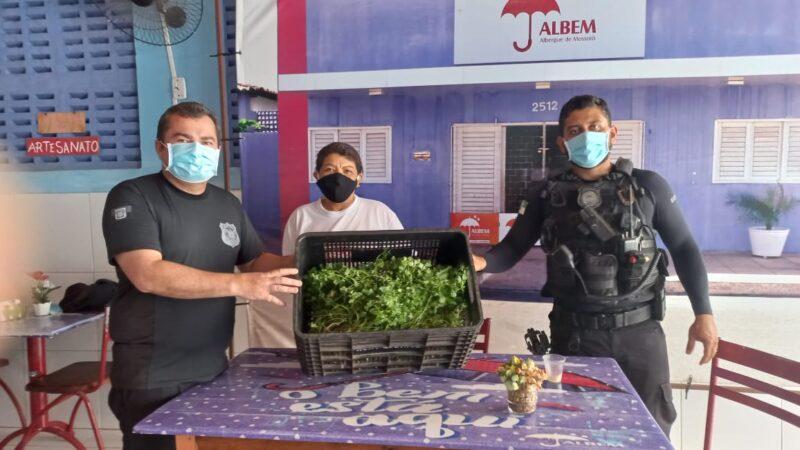 Presos cultivam hortaliças orgânicas para instituições humanitárias