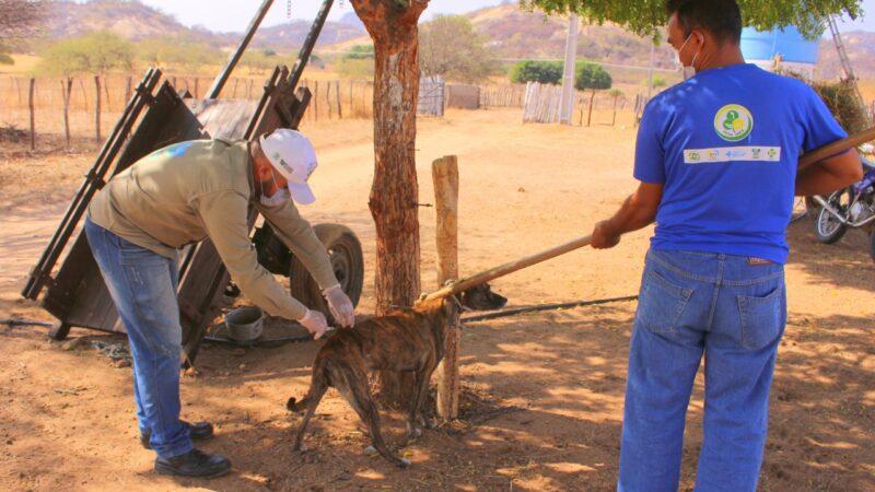 Secretaria de Saúde de Patu começa a vacinar cães e gatos da zona rural